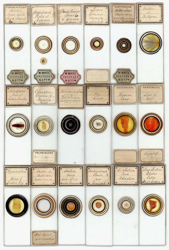 "Vintage microscope slides. ""W. White"" actual name probably George Harris, ca. 1835 – 1904"