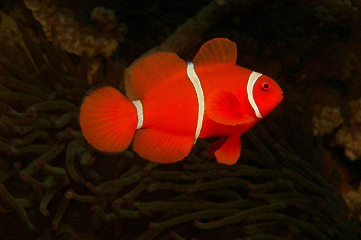 underwaterpics.de [Home]