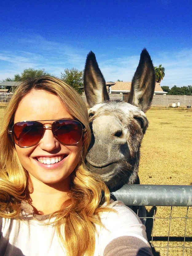 Cet âne qui fait un grand sourire pour un selfie.