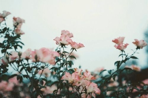 We love florals around here, and we wanted to share some of our favorite floral desktop wallpapers in the spirit of valentine's day! ∫flourish∫ | Flower header, Aesthetic desktop wallpaper