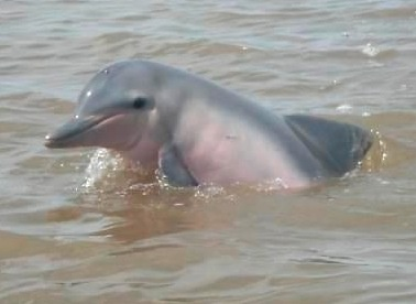 Commewijne River Dolphin Tour - Suriname
