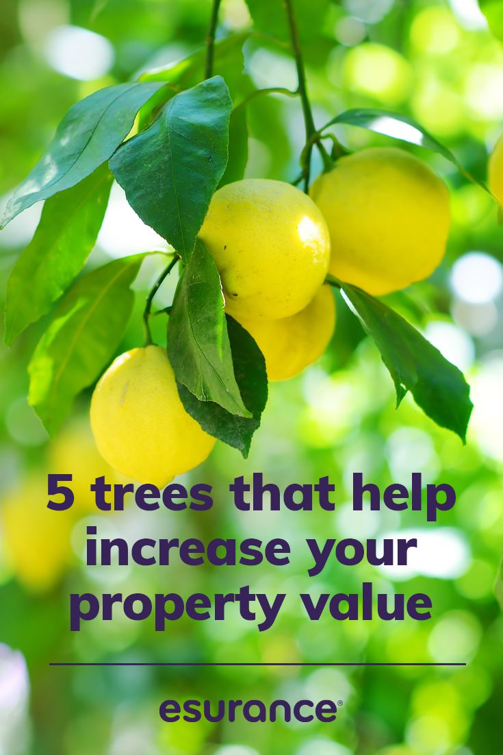 Putting The Green In Home Values With Trees Property Values Home Values Home Insurance