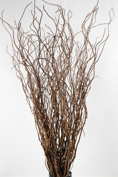 25 Cute Willow Branches Ideas On Pinterest Curly Willow