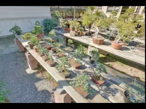 Grove Way Bonsai Nursery | Hayward, CA | Garden Centers - YouTube