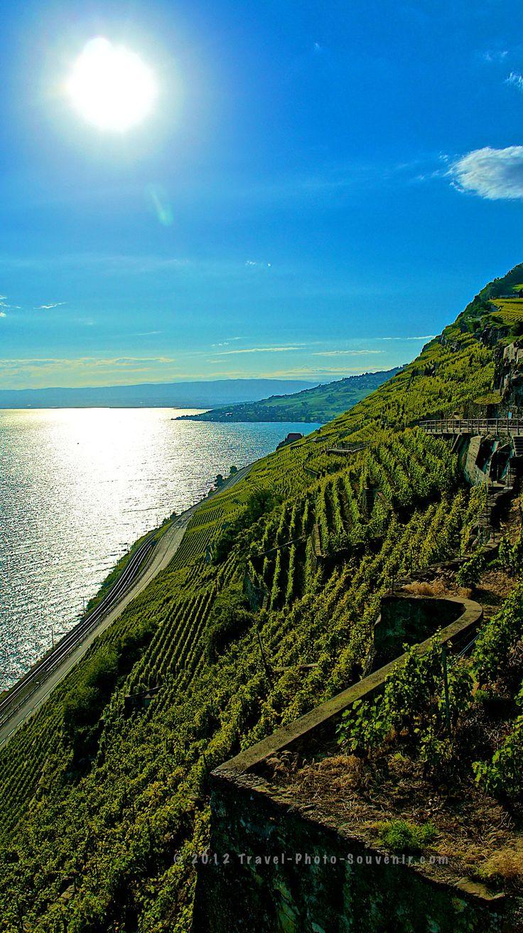 Vineyards, Lake and Swiss Alps from Saint-Saphorin Lavaux