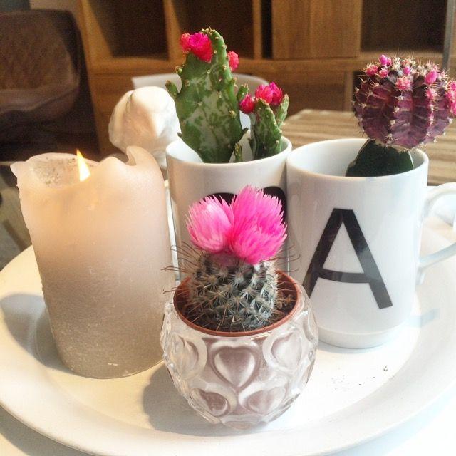 Het is weer tijd om je cactussen een heel klein beetje water te geven! Fleur je huis op met deze super leuke cactussen!