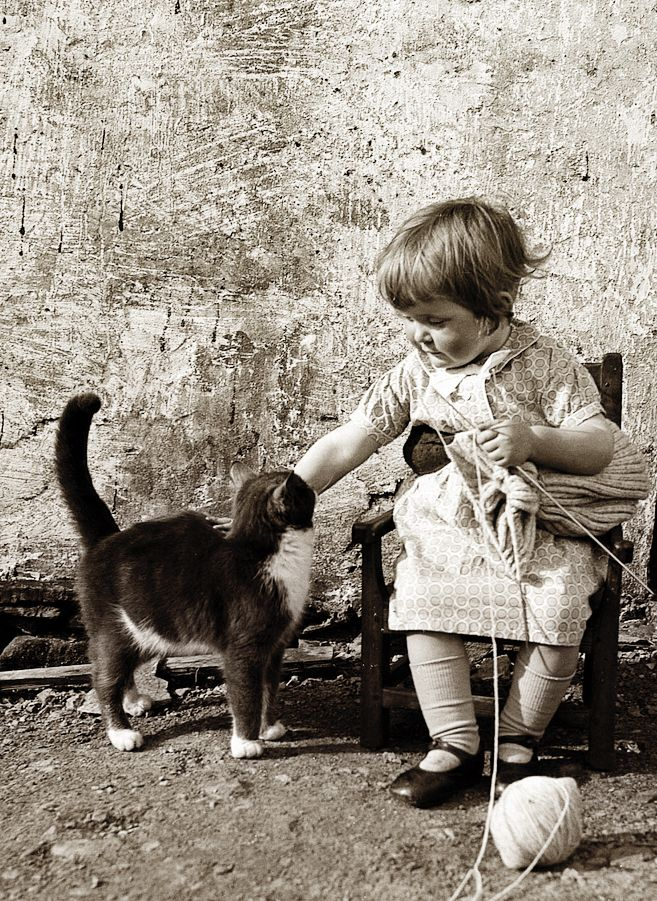 +~+~ Vintage Photograph ~+~+   Girl knitting but taking a break to pet her kitty.  ca. 1940 Walls, Shetland.