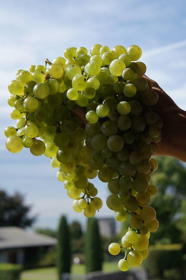 Harvest 2013