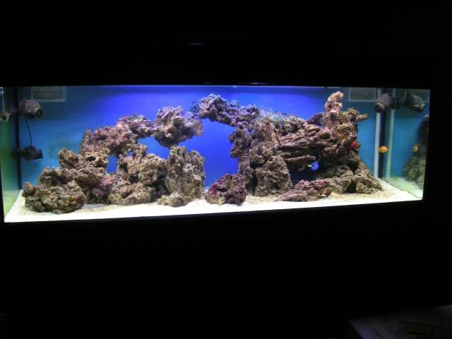 the 88 best aquarium hobbyist images on pinterest fish aquariums rh pinterest co uk Setting Up Saltwater Aquariums Beginners Best Aquarium Fish for Beginners