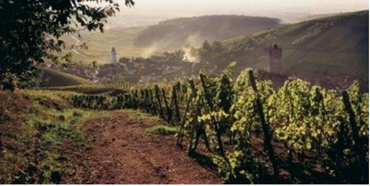 De Elzas heeft een nieuwe Grand Cru en dat gebeurt niet snel...  Wil je weten welk druivenras het is, kijk dan snel op http://www.wijngekken.nl/?p=40170  #elzas #grandcru #redwine