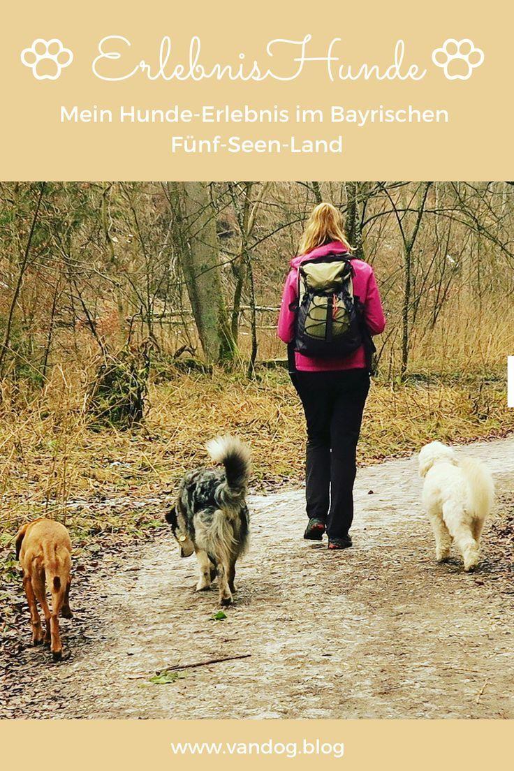 Erlebnishunde Ein Hunde Erlebnis Im Bayrischen Funf Seen Land