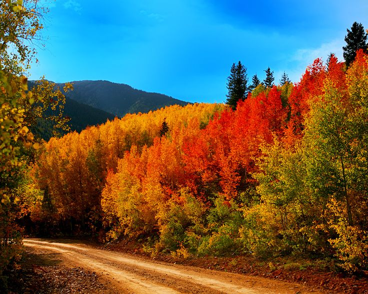Michigan Fall Colors Wallpaper Colorado Backroad Colorado Fall Colors Near Silverton