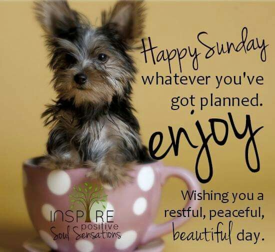 Happy Sunday, Whatever You've Got Planned. Enjoy Wishing You A Restful, Peaceful, Beautiful Day