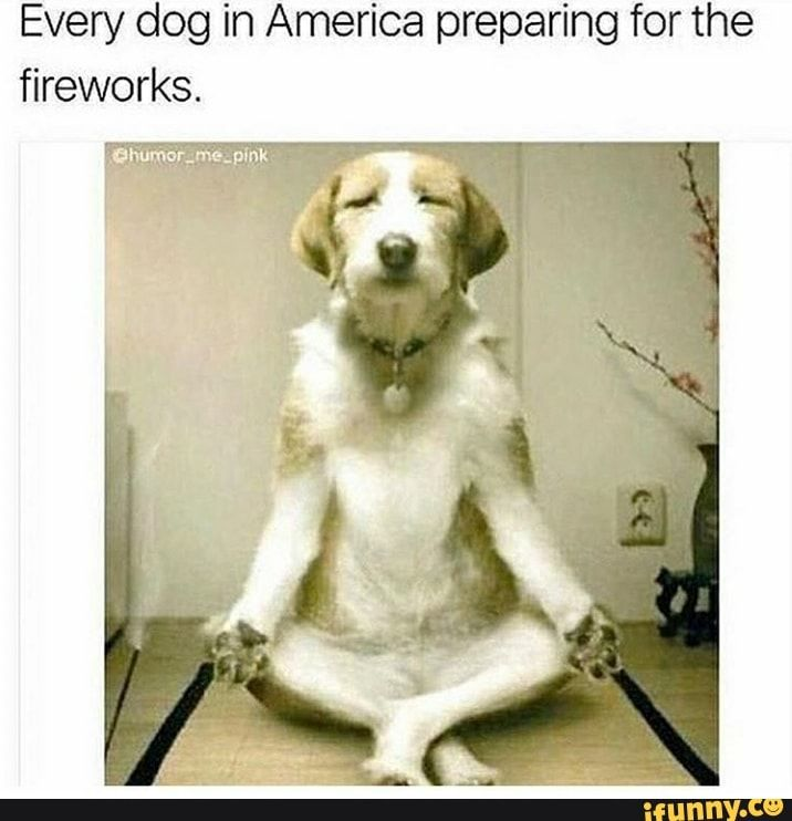 Found On Ifunny Dog Yoga Yoga Funny Funny Dog Pictures