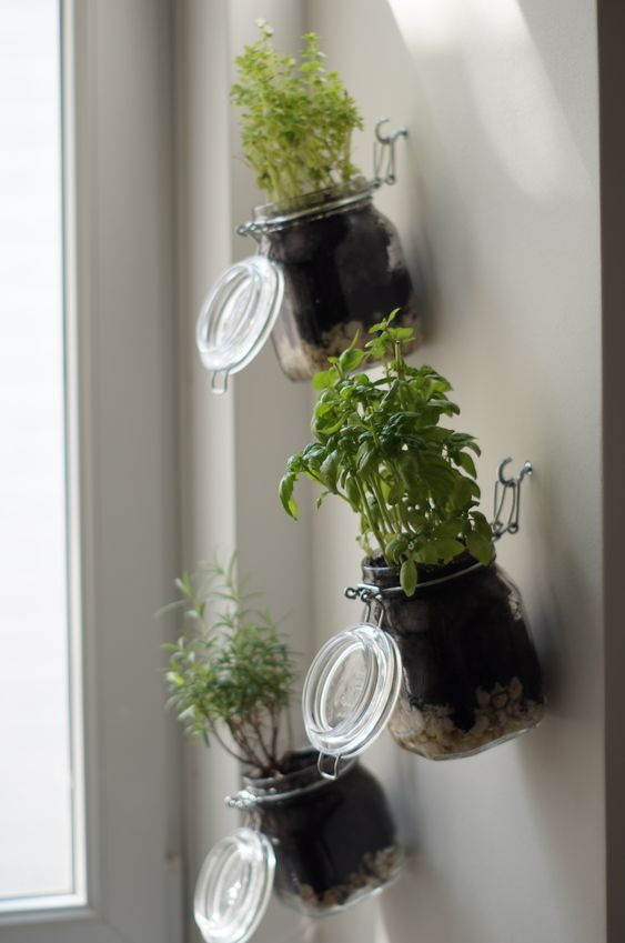 DIY indoor herb garden: step by step instructions