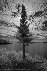 paint lake thompson manitoba - Google Search