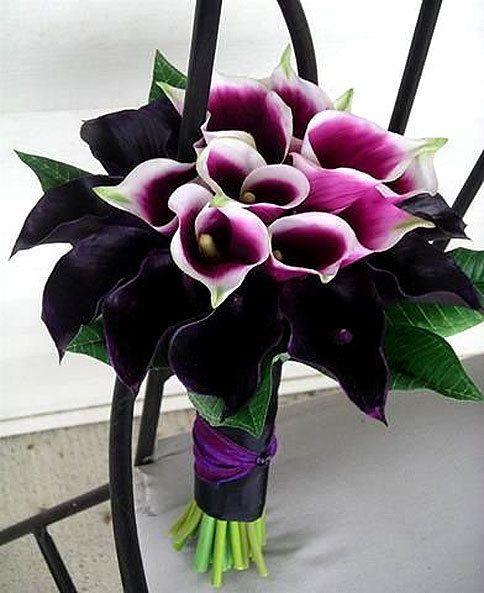 Amazing bouquet of Calla Lillies