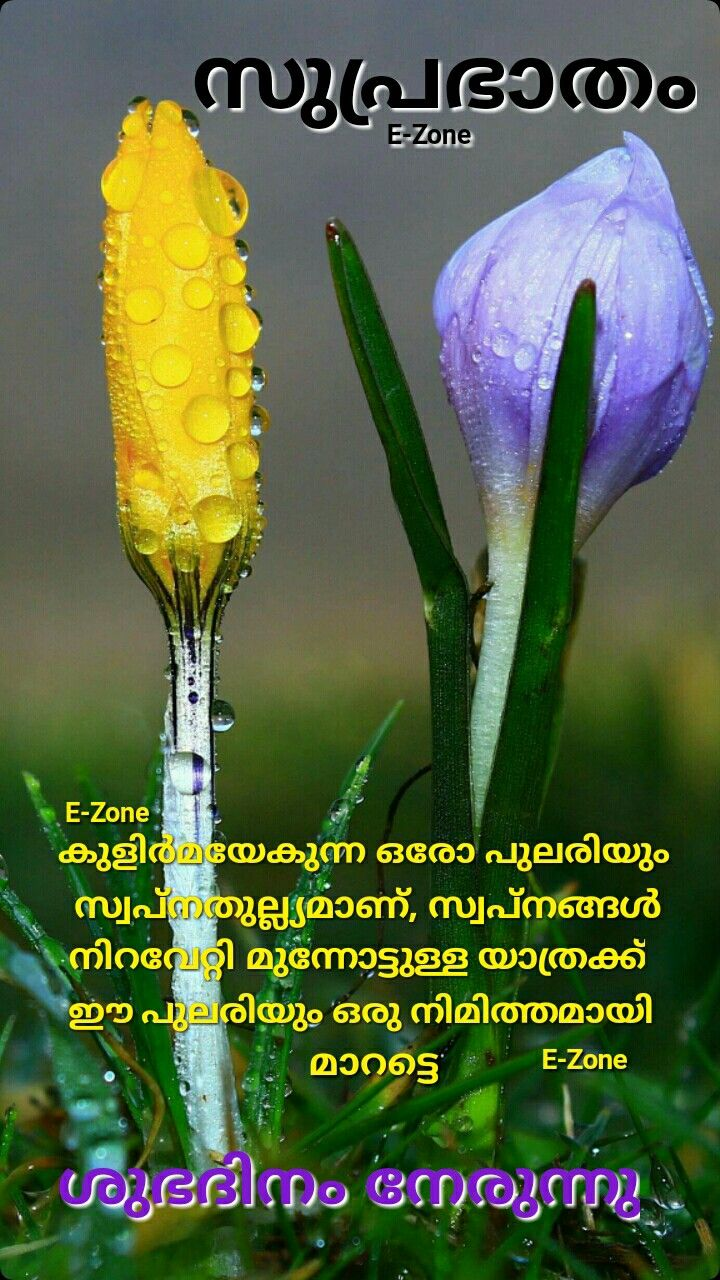 Pin By Eron On Good Morning Malayalam Good Morning Wishes