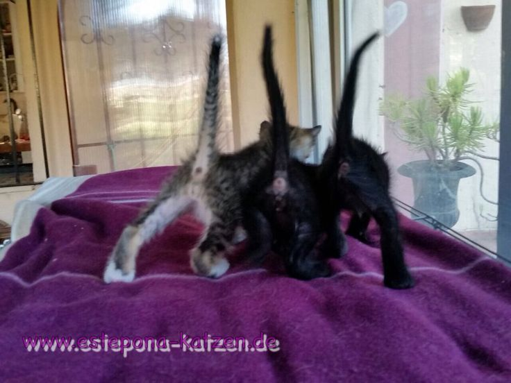 Estepona-Katzen  #kitten #cats #katzen #gatta #gattos #babycats #pet #cute