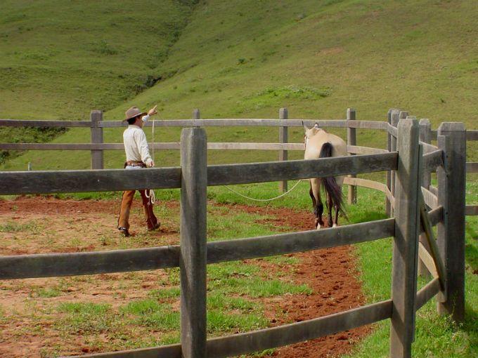 Doma natural de cavalos - rodando o equino no redondel com cabresto ou guia #alcanceosucesso