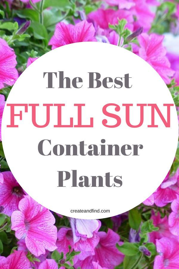 Container Plants For Full Sun Full Sun Container Plants