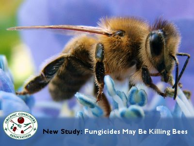 """""""Bee populations are dwindling across the globe, putting one in three food crops like apples and almonds, which depend on pollination from bees, at serious risk."""""""