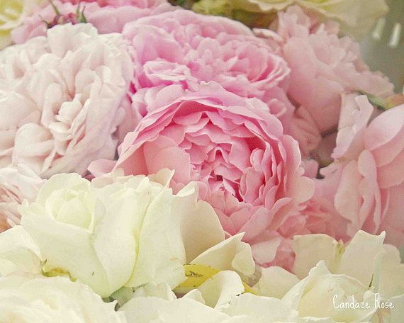 White & Pink Cabbage Rose Bouquet