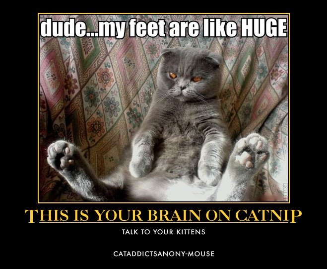 This Is Yourin On Catnip Talk To Your Kittens