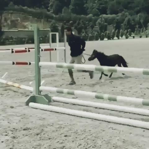 miniature foal over jump (gif)