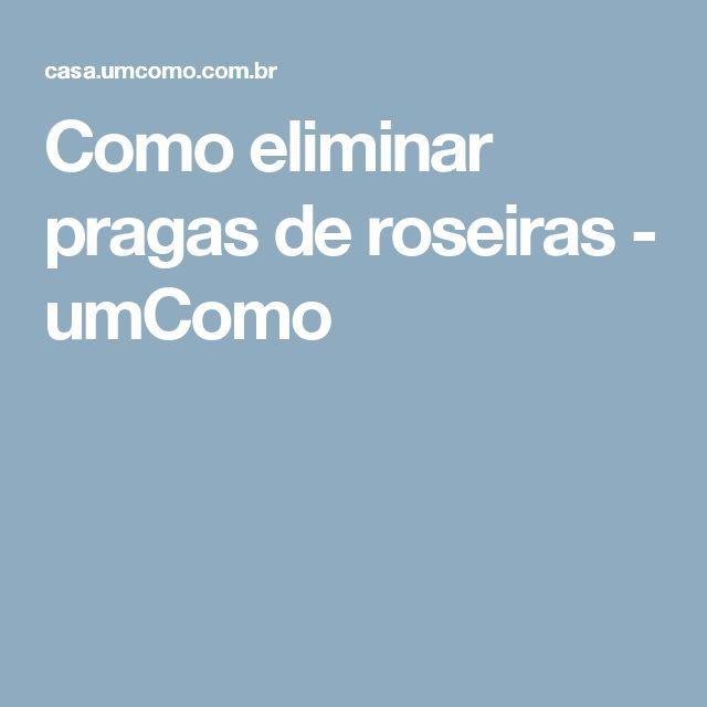 Como eliminar pragas de roseiras - umComo
