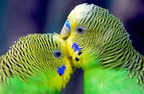 15 fotos de adoráveis animais fofos se beijando