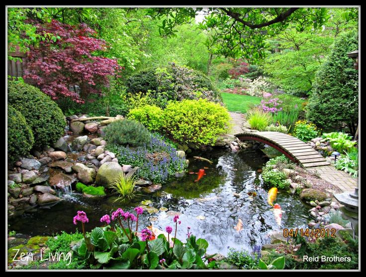 18 best images about japanese gardens on pinterest for Fish pond landscaping