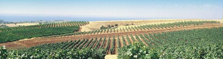 Tsantali wine from 3000+ year old vineyard in Thrace, East Macedonia.
