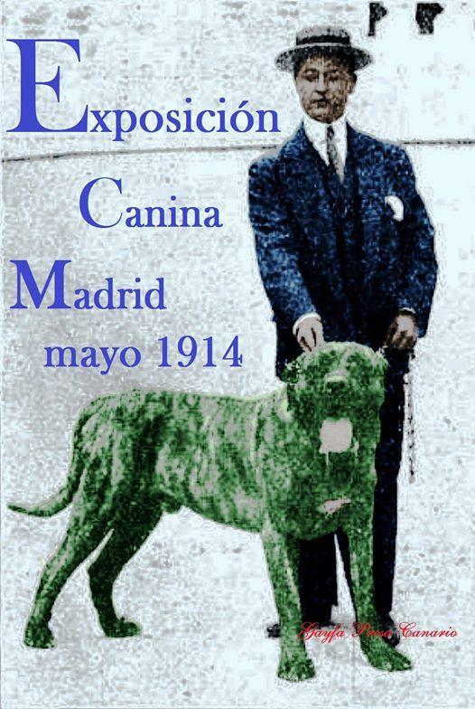 Dogo presentado en la Exposición canina de mayo en el Madrid de 1914.