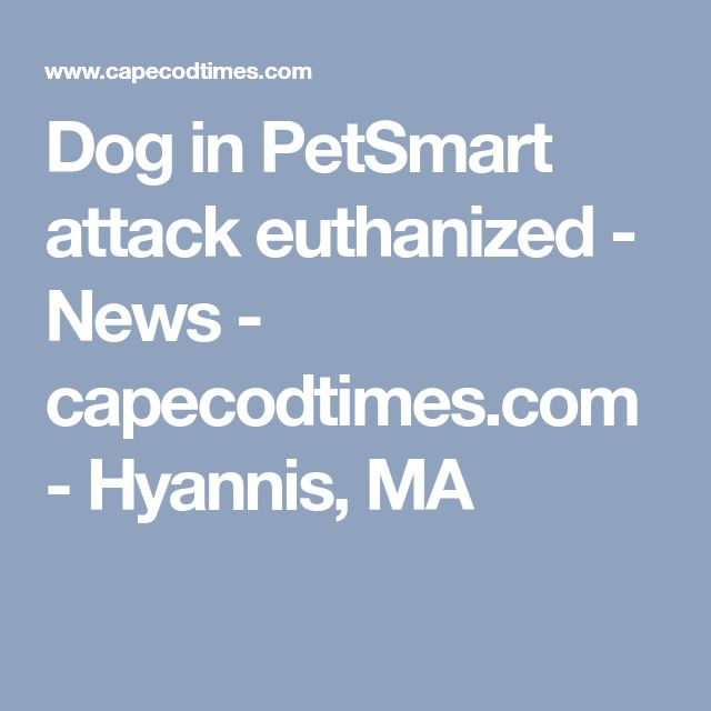 Dog In Petsmart Attack Euthanized News Capecodtimes Com