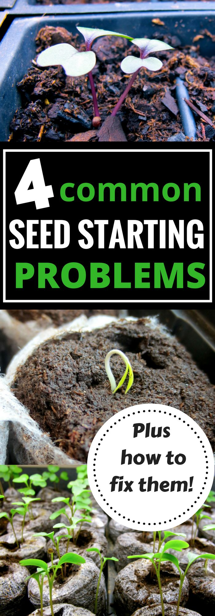 Trying to start your seeds indoors this spring? Get your garden off to the right start and learn these common seed starting problems AND how to fix them!