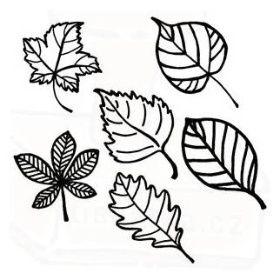 Listy listnatých stromů - Razítka a tiskátka