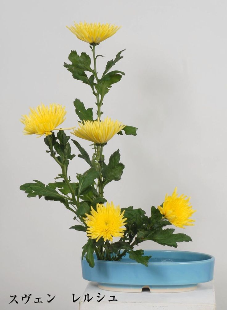 Ikebana Basic beginner design