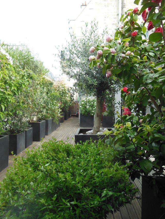 Terrasse Et Jardin : Des Plantes Pour Se Protéger Des Voisins