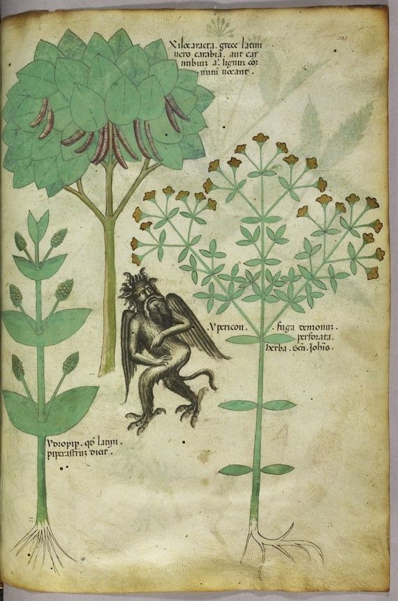 """Tractatus de Herbis (ca.1440) Selections from a beautifully illustrated 15th century version of the """"Tractatus de Herbis"""", a book produced to help apothecaries and physicians from different linguistic backgrounds identify plants they used in their daily medical practise. No narrative text is present in this version, simply pictures and the names of each plant written in various languages. Miniature of plants and a demon: the herb ypericon, supposed to repel demons."""