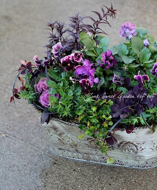 「Junk sweet Garden tef*tef*」で取り扱う商品「tef*tef*寄せ植え<BR>* no.68 * <BR>ブリキ×パープル花」の紹介