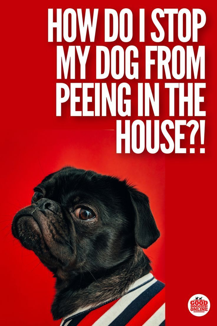 5 Hacks To Stop Your Dog Peeing In The House Dog Pee Puppy