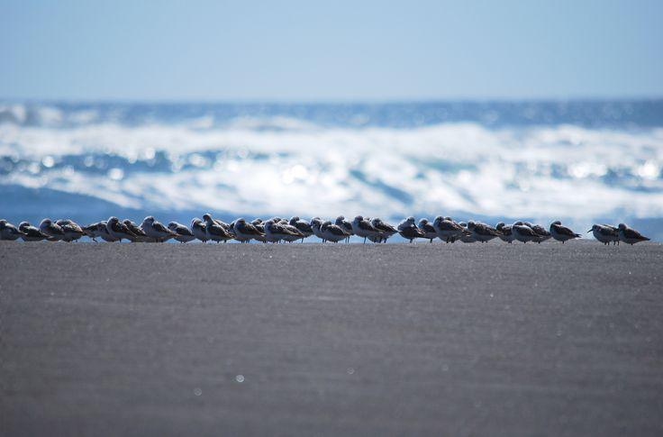 Punta de Lobos · Pichilemu · Chile / Photo renzobraccesi©