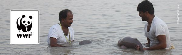 A joint team of WWF-Pakistan and the Sindh Wildlife Department recently rescued two stray Indus River dolphin calves caught in a canal in eastern Pakistan.  The calves, a male and female, were stranded in the Dehar Wah canal for two hours before the successful rescue saw them released 80 km downstream.