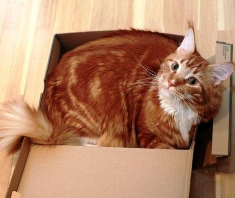 """Я уже рассказывала, что кот Матвей меня любит? Его девиз: """"раз я тебя полюбил – терпи, детка"""""""