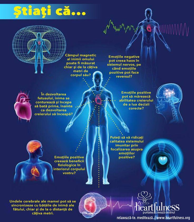 Știați că… ❤ Câmpul magnetic al inimii omului poate fi măsurat chiar și de la câțiva metri de corpul său? ❤ Emoțiile negative pot creea haos în sistemul nervos, pe când emoțiile pozitive pot face reversul? ❤ Emoțiile pozitive pot să mărească abilitatea creierului de a lua decizii corecte? ❤ Puteți să vă ridicați calitatea sistemului imunitar prin focalizarea asupra emoțiilor pozitive? ❤ Emoțiile pozitive creează beneficii fiziologice în interiorul corpului vostru? [...]