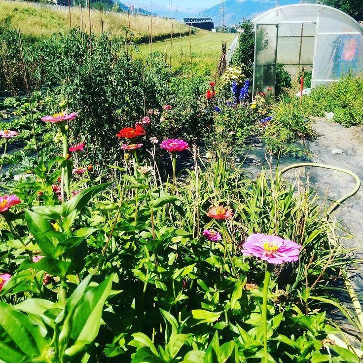 Il nostro piccolo angolo di bontà e benessere #orto #km0 #flowers #vegetables #green #healthy #foodporn #instafood #fenis #nature #genuino #handmade #chezhcdc #chefgiovanni