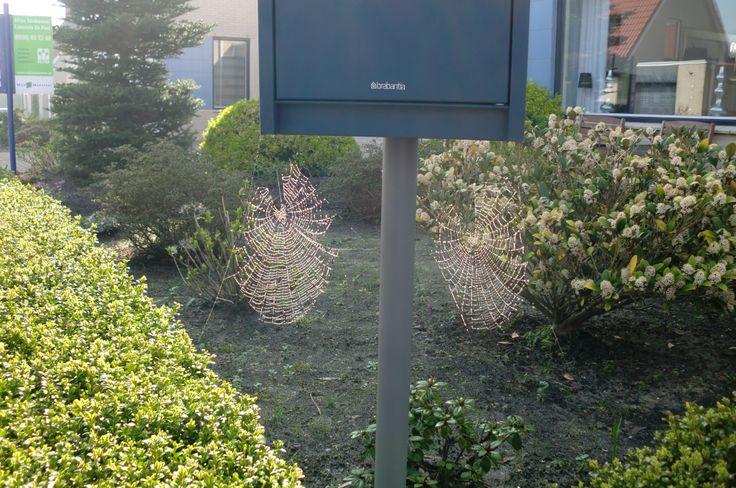 duo spinnenwebben onder een postbus