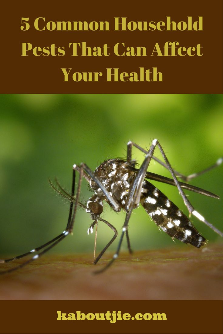 Household pests are not only annoying but they can also pose some mild to serious health risks to yourself and to your family.  Here are 5 Common House Pests That Can Affect Your Health.   #GuestPost #HouseholdPests #HousePests
