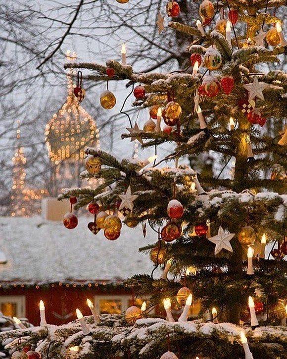 Mccoys Christmas Trees: 916 Best 1 Christmas & New Year Images On Pinterest